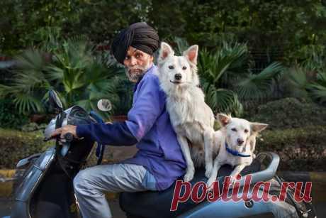 Будни в Дели. Автор фото – Анастасия Колесникова: nat-geo.ru/photo/user/50255/
