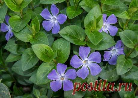 Неубиваемые цветы для сада, не требующие вашего внимания — 4 часть | Что посадить? | Яндекс Дзен