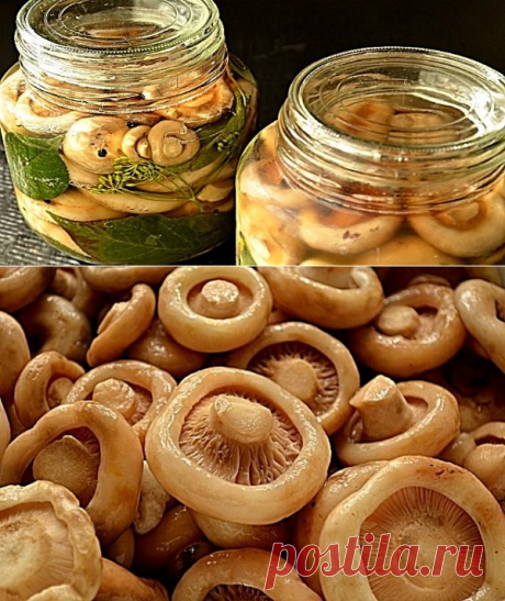 Milk mushrooms are salty: a crude way of salting for fans of tasty!