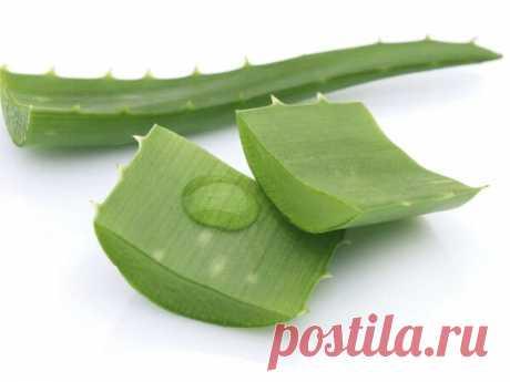 Салат из молодой капусты, как в советской столовой, – рецепт с фото