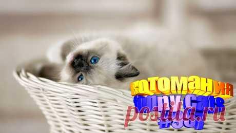 Любите смотреть приколы про котов? Тогда мы уверены, Вам понравится наше видео 😍. Также на котомании Вас ждут: видео кот,видео кота,видео коте,видео котов,видео кошек,видео кошка,видео кошки,видео о котах, видео про кота, видео смешное о кошках, для котов видео, коты видео, кошек, кошки 2020, приколы от кошек, про кошек смешных, про кошку смешное видео, смешно кошка, смешные видео про животных, смешные кошки