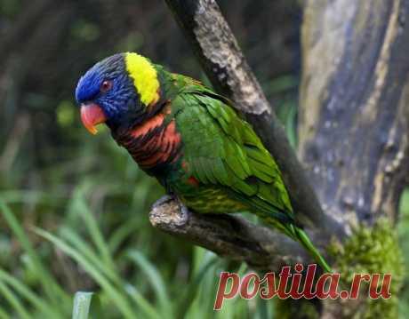 Самые красивые птицы в мире - 8 Октября 2013 - Портал Дамира Шамарданова