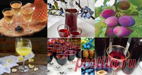 Сливовое вино из слив в домашних условиях: 10 рецептов Вино из слив - быстрые и простые рецепты для дома на любой вкус: отзывы, время готовки, калории, супер-поиск, личная КК