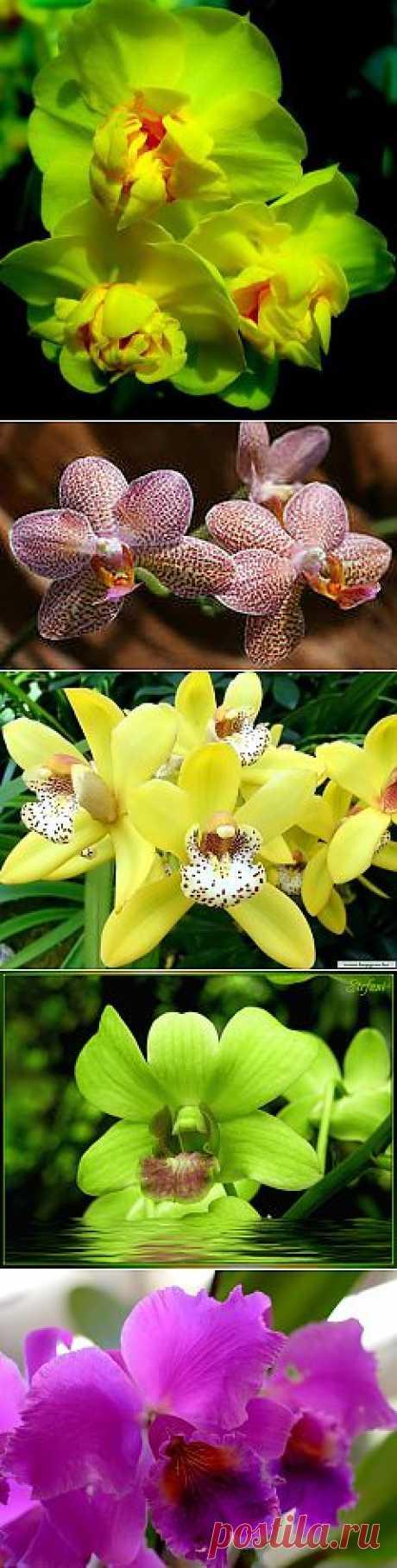 фото цветы орхидеи:
