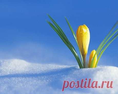 Где-то под снегом уже тихонько дышит весна!