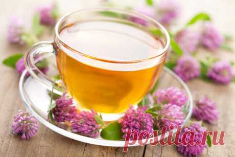 Клевер красный - полезные свойства для женщин и выращивание