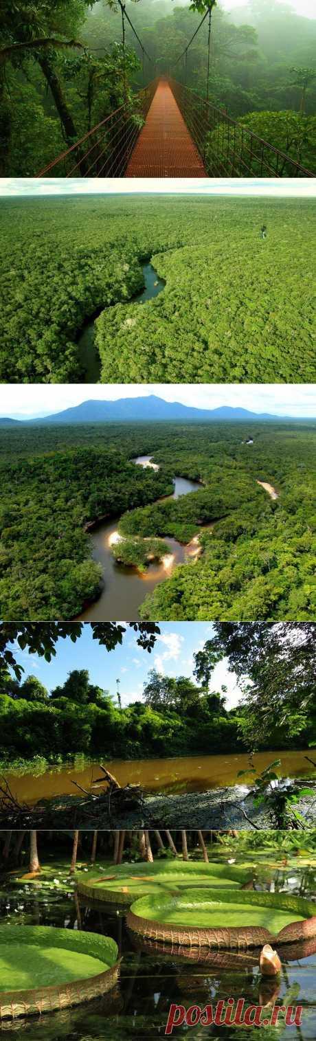 Путешествие по лесам Амазонки | МУЗА НАШЕГО ДВОРА