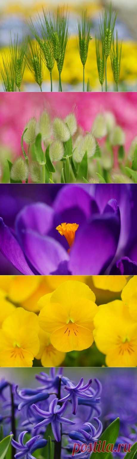 Нежная красота цветов.