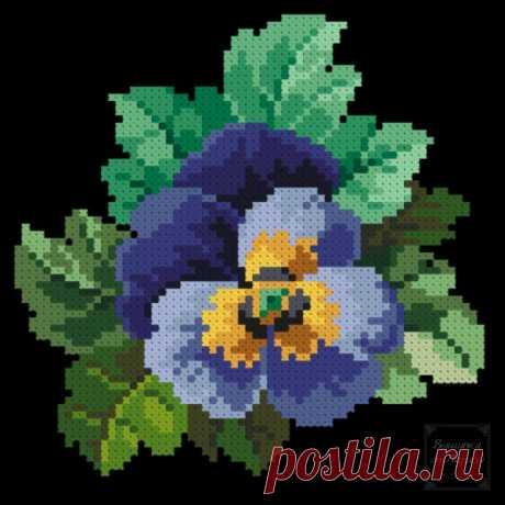 (6) Gallery.ru / Фото #1 - Виола 2 - larisa-bnw
