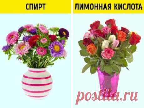 Эффективные способы оживить цветы / Все для женщины