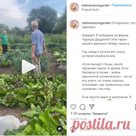 Маша Дачница со вкусом👌🏻 в Instagram: «Осторожно, пост заряжен! ⠀ Аааааа!!! Я побывала на ферме Чарльза Даудинга!! Или герои нашего времени теперь такие☺️ ⠀ Год назад я купила…»