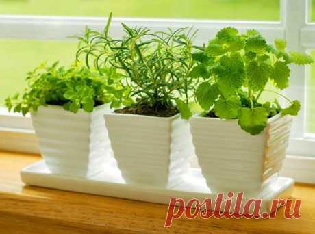 Выращивание зелени в домашних условиях.