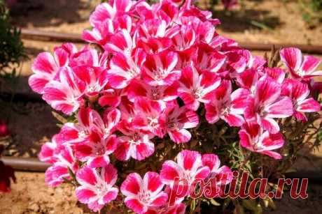 Какие цветы не поздно посеять в июне. 5 быстрорастущих однолетников | Хочу на дачу! | Яндекс Дзен