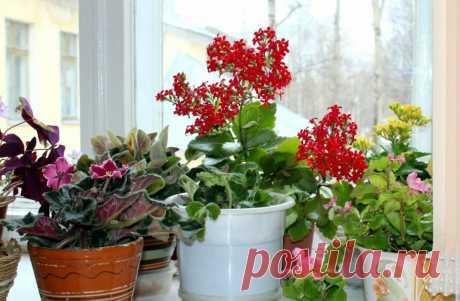 Опытный цветовод научил меня подкармливать домашние цветы зубной пастой - растения ее просто обожают | Флора | Яндекс Дзен