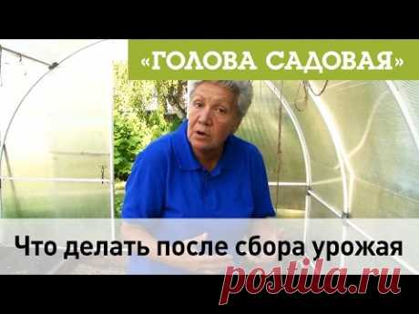 Голова садовая - Что делать после сбора урожая