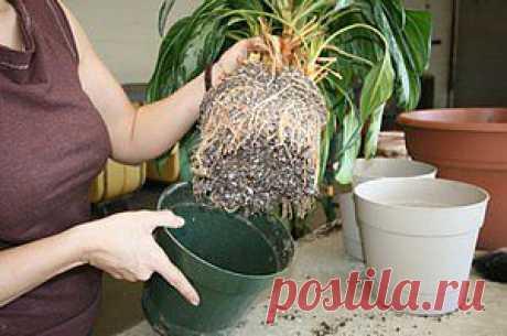 Пересадка комнатных растений | Женский сайт о женщине и обществе