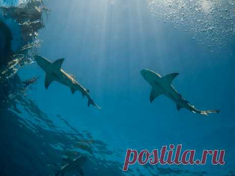 Ship Sharks Explore altsaint's photos on Flickr. altsaint has uploaded 2960 photos to Flickr.