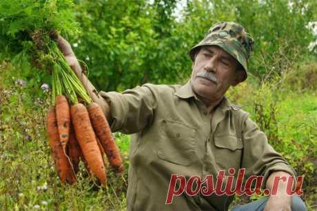 Подкормка после которой морковь идет в быстрый рост!
