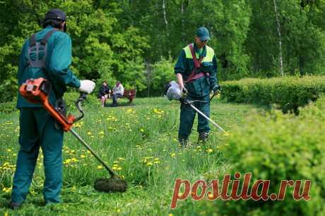 Какой штраф грозит за нескошенную траву на дачном участке? | 6 соток