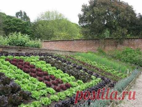 Как сделать красивый огород на даче. Ландшафтный дизайн. - YouTube