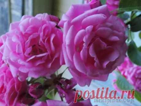 Розы - царицы сада