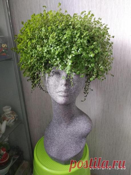 Солейролия - комнатное растение,которое преобразить любой интерьер!А также - чайная чашка в виде цветочного горшка.Мастер класс.   Юлия Жданова   Яндекс Дзен