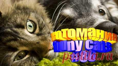 видео котов смешных, смешные видео котов, видео смешной кот, кот видео смешное, видео кот том, приколы коты видео, видео котов, видео про кота, кота видео, видео животные смешные, животные смешное видео, смешное животное, про смешных животных, животные смешное, приколы котов, прикол с котом, приколы с котом, смешные кошки, видео смешные кошки, смешное про кошек, про смешных кошек, видео кошек смешные, кошка видео смешное, смешное кошка видео, видео кошки смешные, кошек смешные, видео про кошек