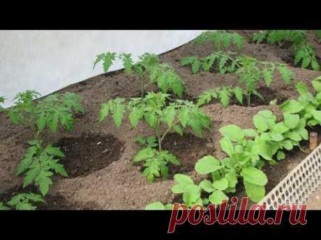 Crib No. 4 Ten ways against a seedling pulling