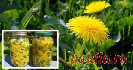 Păpădia a fost o plantă populară de mii de ani, și proprietățile sale medicinale au fost utilizate în tratamentul diferitelor boli și condiții de sănătate. Detoxifica ficatul, stimulează producția de bilă, regleaza nivelul de colesterol, trateaza alergiile, si este de … Continuă citirea →