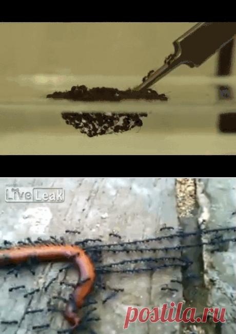 Поразительные способности муравьев — Наука и жизнь