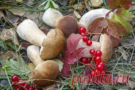 Куда девать грибы? Способы заготовки на разные случаи жизни