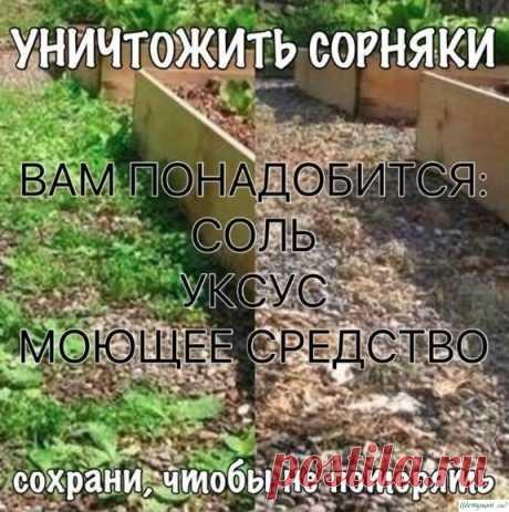 Уничтожить сорняки