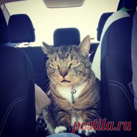 Сижу в машине, горько плачу... Опять везут к мышам на дачу.