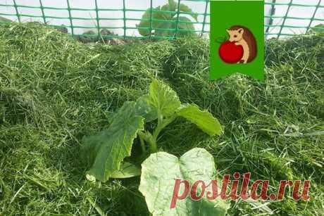6 вариантов губительной мульчи для огорода: что только навредит, а не принесет пользу | садоёж | Яндекс Дзен