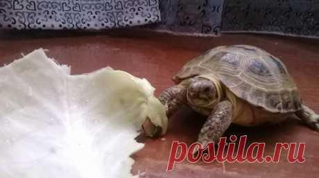Черепаха Марго.