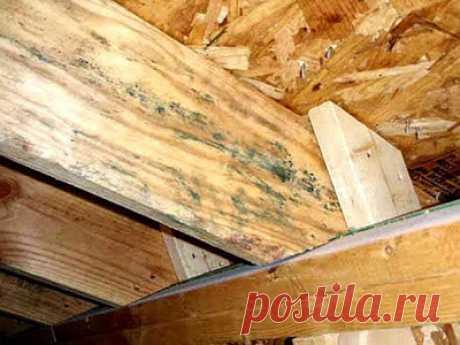 Защита бани от гниения   Качество установки и материала для возведения деревянной бани непосредственно влияет на срок эксплуатации сруба. Необходимо выполнять все требования строительного процесса, чтобы брусья не нуждались…
