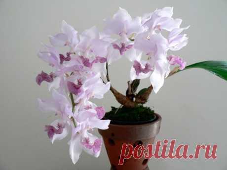 Орхидея аганизия: уход в домашних условиях, виды