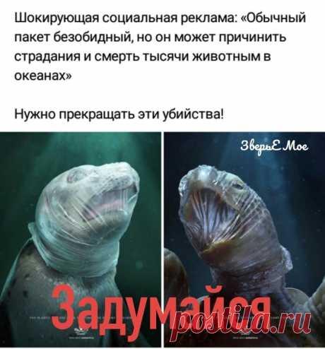 #всероссийское_зоозащитное_движение