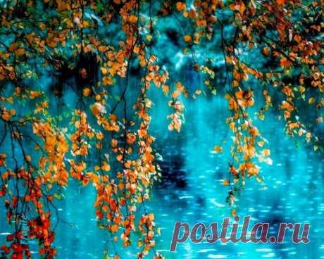 .ღ..Осень – это все цвета светофора в одном парке. Жизнь рвётся вперёд, когда парк весенне-зелёный и притормаживает, когда все цвета горят одновременно.