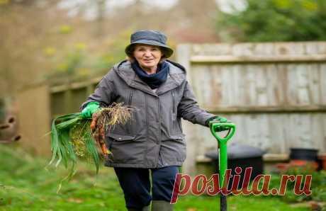 Как приготовить самый быстрый компост и получить плодородную землю. Из чего делать компост.