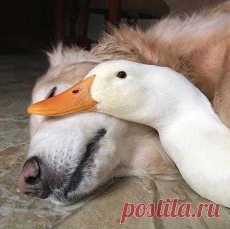 Душевная фотоподборка! / Приколы