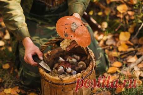 К чему снится Собирать Грибы — 50 значений сна для мужчин и женщин собирать в лесу, на кладбище много съедобных больших грибов