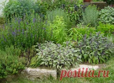 Пряные травы для мест с притенением. Что вырастить в тени? Фото - Ботаничка.ru