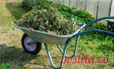 Что делать с растительными остатками?   Почва и плодородие (Огород.ru)