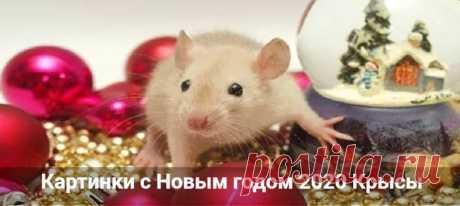 Картинки с Новым годом 2020 Крысы: прикольные с пожеланиями Картинки с Новым годом 2020 Крысы. Красивые и прикольные новогодние открытки с символом года. Нарисованные мышата карандашом.