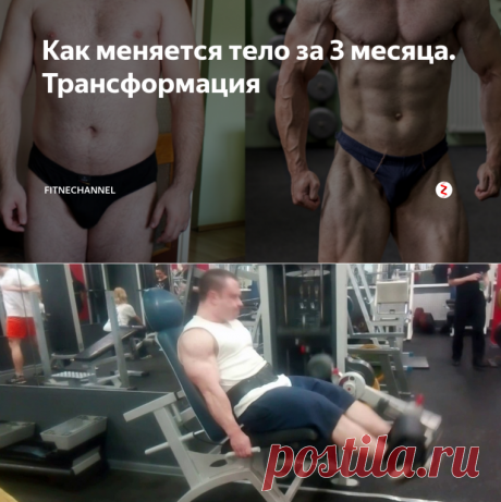 Как меняется тело за 3 месяца. Трансформация | fitnechannel | Яндекс Дзен