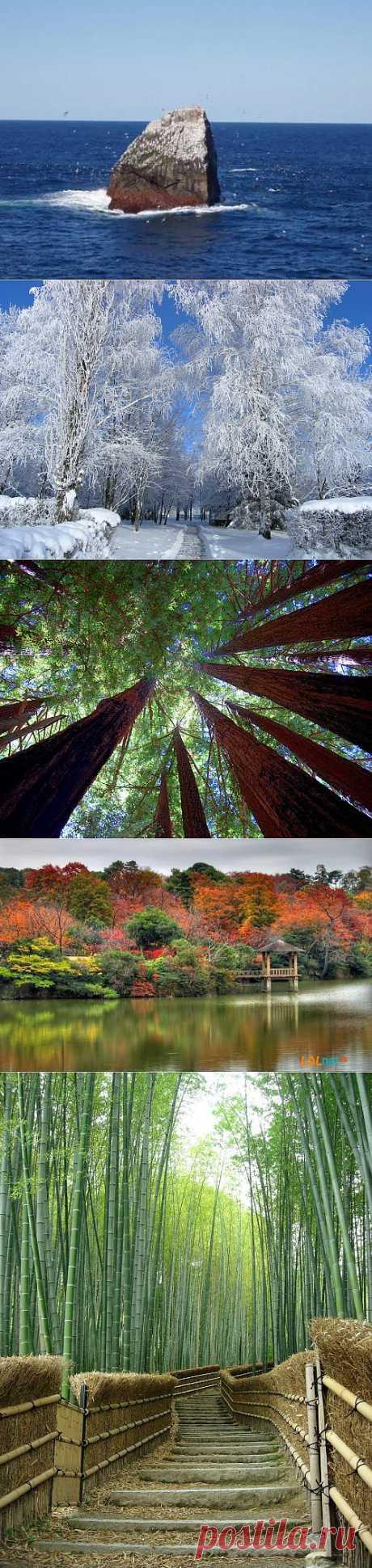 Природа | Записи в рубрике Природа | Здесь еще интересней