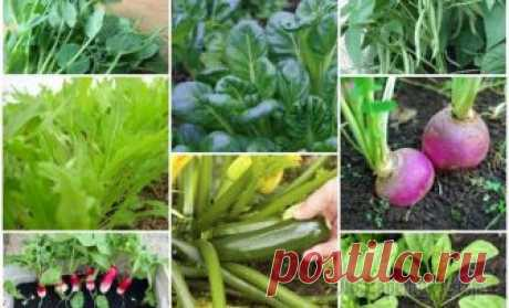 We Tell 9 fast-growing plants for a spring kitchen garden what vegetables to seed in a kitchen garden in the spring to regale on fruits of the works in May – the first half of summer.\u000d\u000aNothing will be compared to that feeling when you for the first time give the first to a table...
