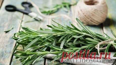 Самая мощная трава для мозгового кровообращения, сердца, сосудов, надпочечников, суставов, кожи, волос и не только! | Калейдоскоп