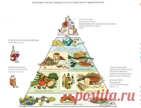 Разоблачение диетологических мифов. Основы диетологии, Гарвардская пирамида питания доктора Уолтера Уиллета.Почему я ей доверяю | Bereg1nya | Яндекс Дзен